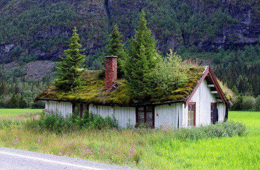 Ceci n'est pas un toit vert...